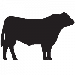 Beef clipart angus cow