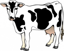 Cattle clipart cow milk