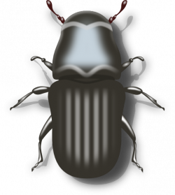 Beetles clipart