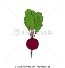 Beet clipart root vegetable