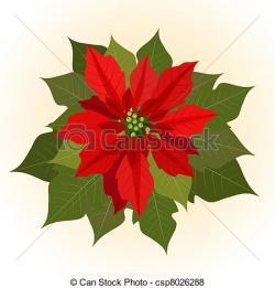 Poinsettia clipart vector