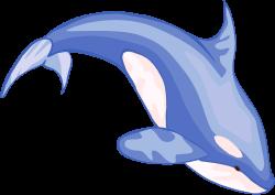 Killer Whale clipart beluga whale