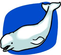 Mammal clipart beluga whale