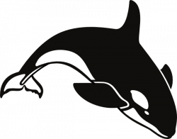 Orca clipart transparent