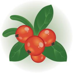 Cranberry clipart berry