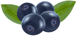 Blueberry clipart pile