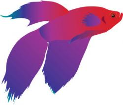 Tropical Fish clipart betta fish