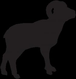 Shaow clipart sheep