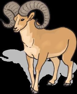 Dall Sheep clipart animal
