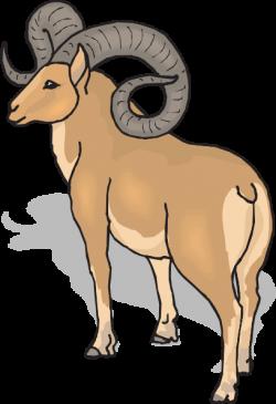 Dall Sheep clipart ram