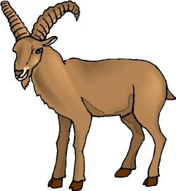 Ibex clipart mountain goat