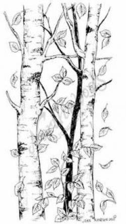 Birch clipart rubber tree