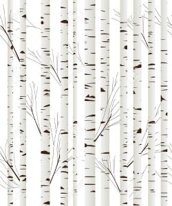 Bark clipart black birch