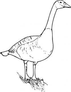 Goose clipart canada goose