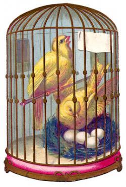 Birdcage clipart canary