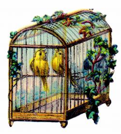 Cage clipart canary bird