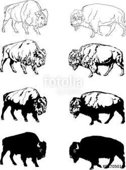 Herbivorous clipart buffalo