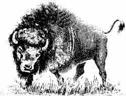 Water Buffalo clipart sketch