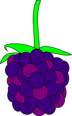 Rapsberry clipart blackberry