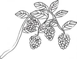 Berry clipart black and white