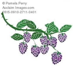 Berry clipart blackberry bush