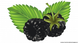 Blackberry clipart blackberry fruit