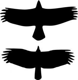 Blackbird clipart large bird