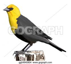 Blackbird clipart male
