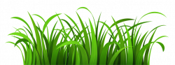 Sea Grass clipart swamp
