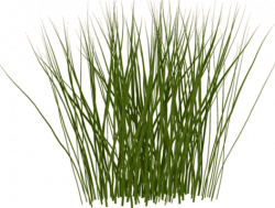 Blade clipart tall grass