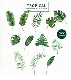 Blade clipart tropical leave