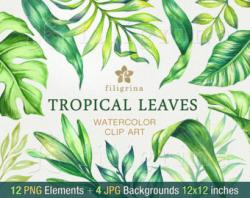Tropics clipart tropical leaf