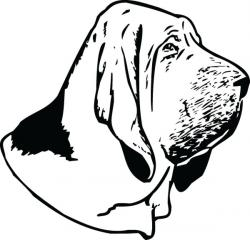 Bloodhound clipart head