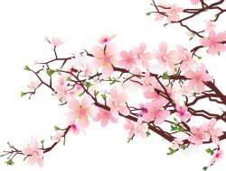 Cherry Blossom clipart