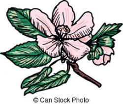 Blossom clipart