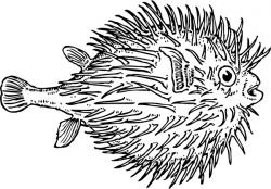 Pufferfish clipart scared