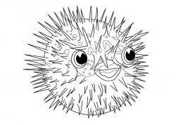 Blowfish clipart black and white