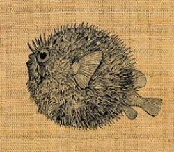 Blowfish clipart