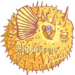 Blowfish clipart sea animal