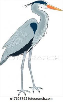 Great Blue Heron clipart heron bird