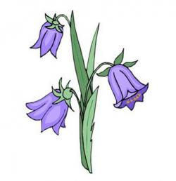 Bluebell clipart cartoon