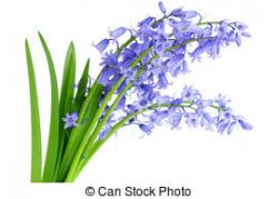 Bluebell clipart english