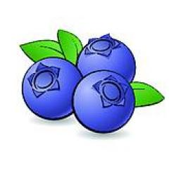 Blueberry clipart