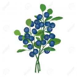 Shrub clipart berry bush