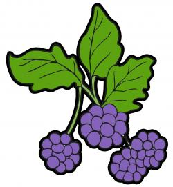 Berry clipart wild berries