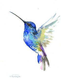 Drawn hummingbird