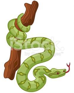 Boa Constrictor clipart cute