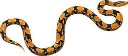 Python clipart boa constrictor