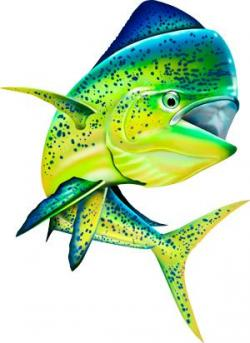 Barracuda clipart saltwater