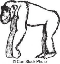 Bonobo clipart